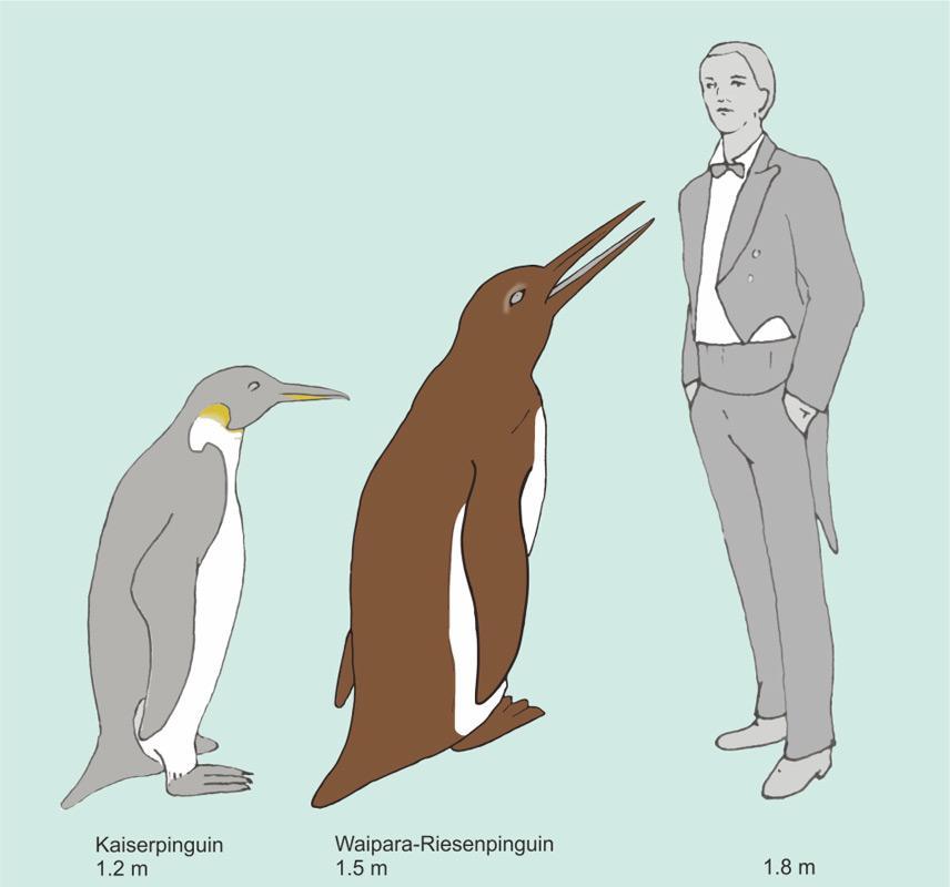 Eine Zeichnung von Waimanu-Pinguinen an einem Strand, nachgezeichnet von einem Künstler. Bisher kennt man von diesen Pinguinen nur wenige Fossilien von der Fundstelle in Neuseeland. Bild: Chris Gaskin