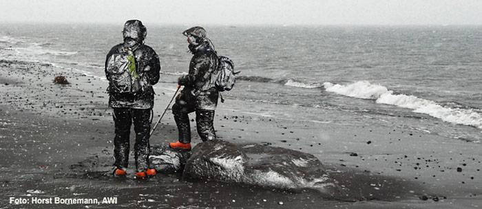 PolarNEWS_20100708_Einsetzender_Winter