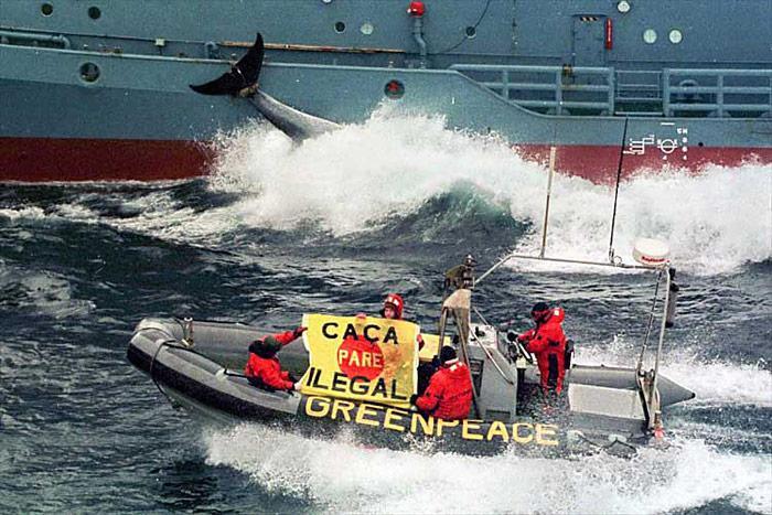 Walfang-Greenpeace