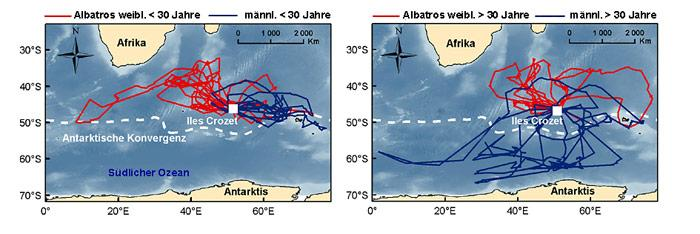 Albatross-Wanderung_Karte