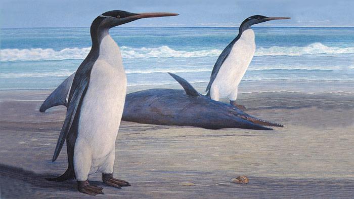 Kairuku Pinguin