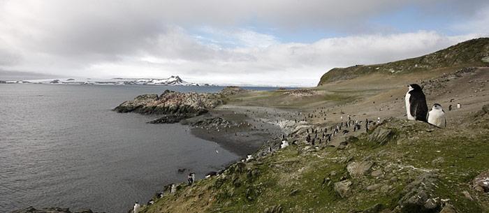 Gräser in der Antarktis