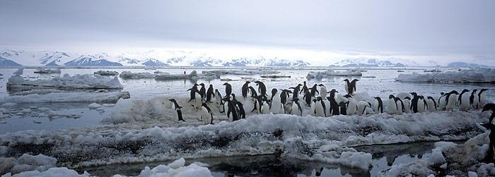 Gegenüber von Australien liegt am Eingang zur Ross Sea Cap Adare und gehört zur Region ACBR 8 – North Victoria Land.