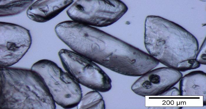 Ikait-Kristalle unterschiedlicher Form und Grösse, unter dem Binokular fotografiert