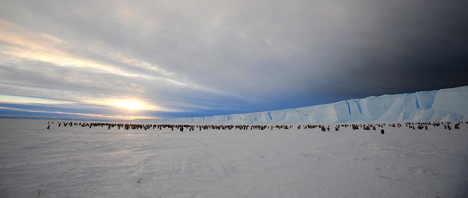 Kaiserpinguine vor der Gletscherfront