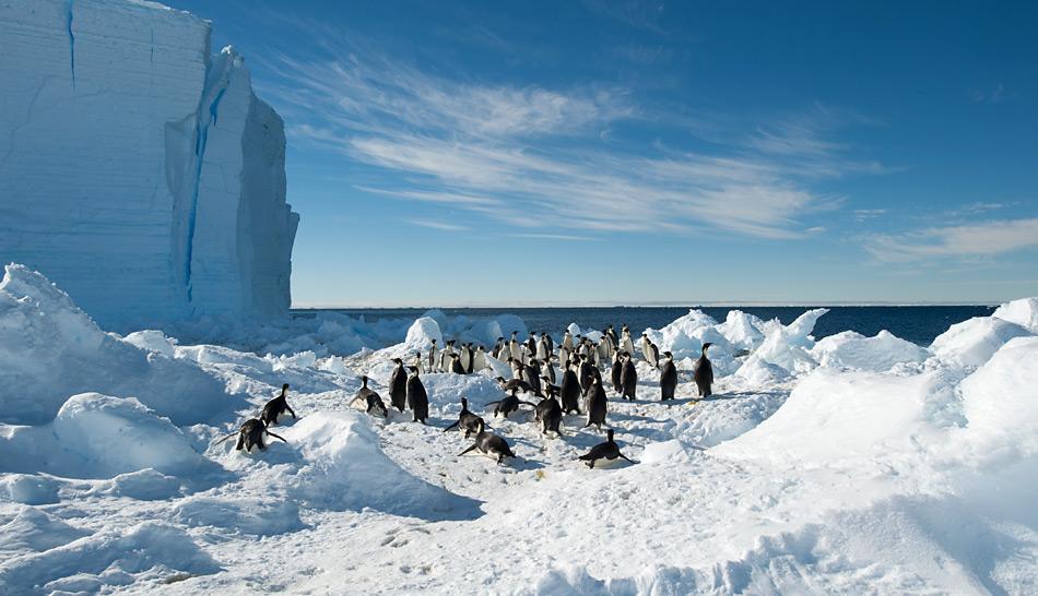 Zwei Kilometer von der Kolonie entfernt gehen die Kaiserpinguine ins Meer zum Fischfang. Bild: International Polar Foundation