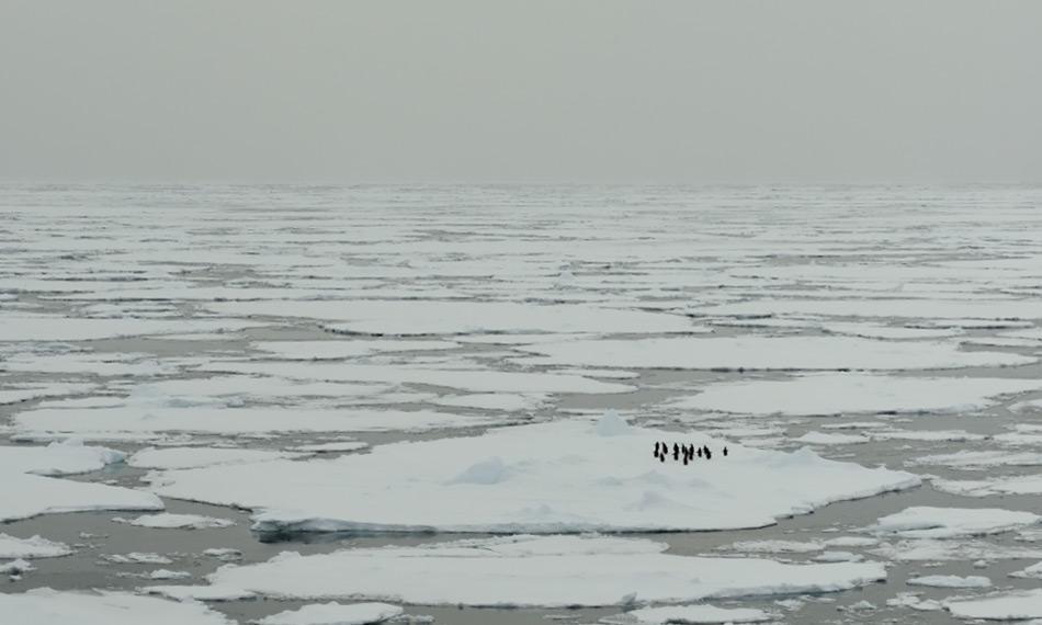 Meereis ist auch biologisch gesehen für Pinguine und Robben wichtig. Die Schollen bilden Ruheplätze im ansonsten strukturlosen Ozean. Gemäss der neuen Studie treiben sie aber auch die Ozeanströmungen an. Bild: Michael Wenger
