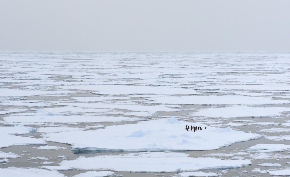Das antarktische Meereis bildet sich jedes Jahr neu und vergrössert das Gebiet Antarktikas auf beinahe 30 Millionen Quadratkilometer. Dies bedeutet ein erhöhtes Verschmutzungsrisiko des fragilen antarktischen Meeresökosystems.