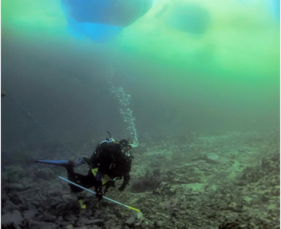 Mit Hilfe von Tauchgängen und Unterwasserfahrzeugen können sowohl in der Arktis wie auch in der Antarktis die Meeresböden erforscht werden. Dabei kommen auch immer wieder neue Lebensformen ans Tageslicht. Bild: BAS