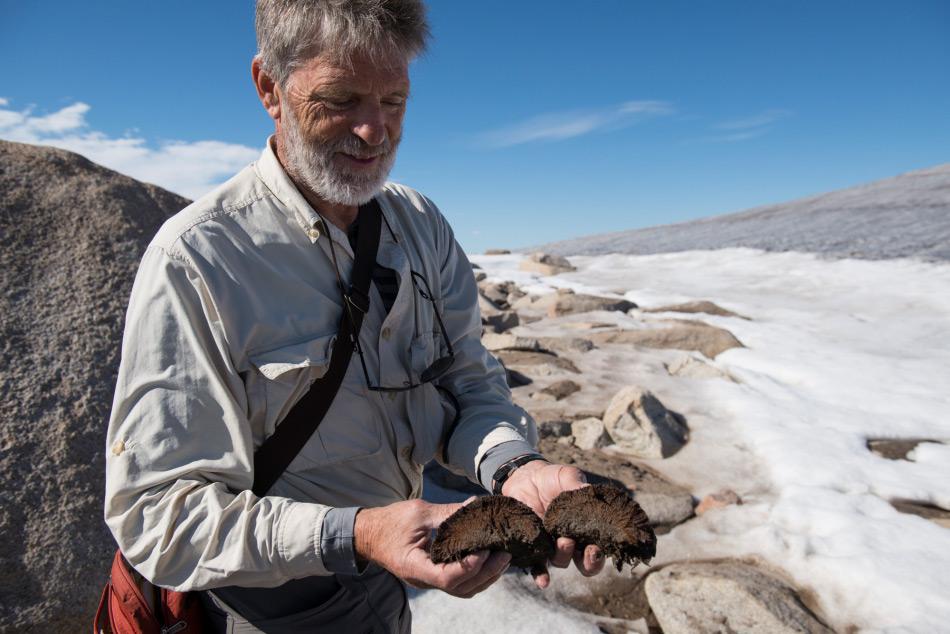 Gifford Miller von der Universität Colorado hält einige gesammelte Moosproben in die Höhe. Die Proben stammen von Baffin Island in der kanadischen Arktis. Bild: Matthew Kennedy, EarthVision Trust