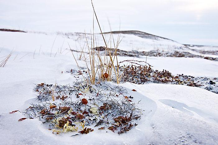 Chukotka-Herbstlaub