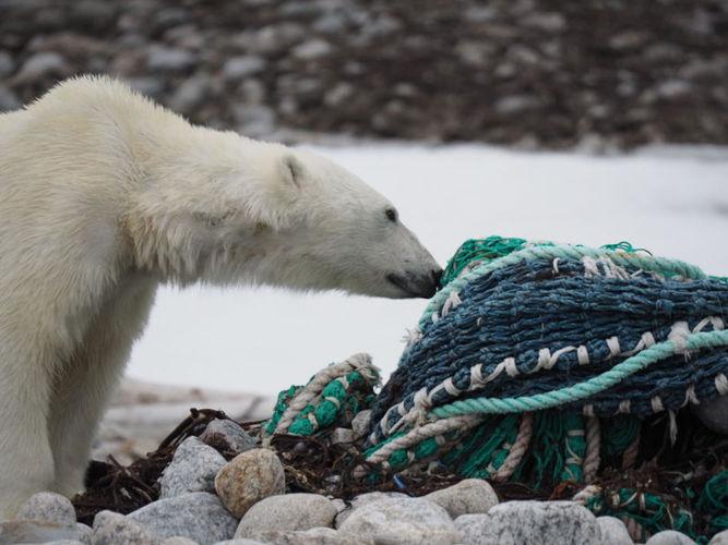 Müll im Meer ist eine Bedrohung für die lokale Tierwelt. (Foto: Zet Freiburghaus, Polar