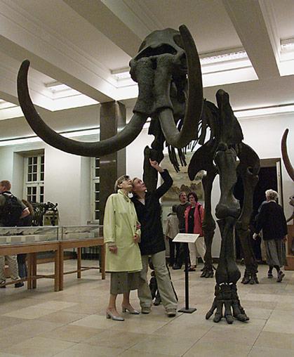 mammut-muenster