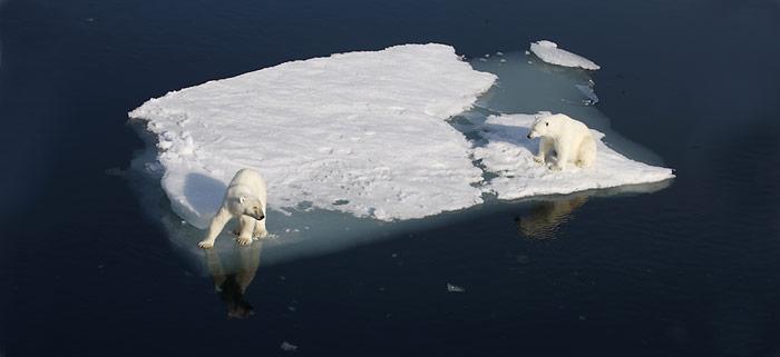Eisbaeren_ohne_Eis