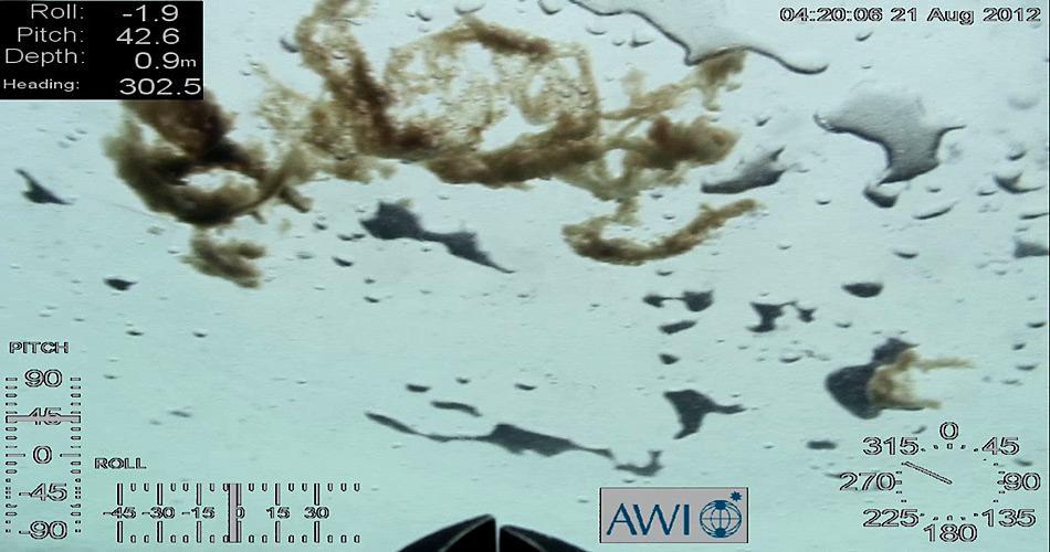 Bei einem Tauchgang hat der Untereis-Roboter namens Ronia der Meereisphysiker dieses Bild von Algen aufgenommen. Unter dem Eis können Kieselalgen meterlange Ketten bilden - im Sommer 2012 konnten die Forscher dies erstmals auch bei einjährigem Eis nachweisen. Foto: ROV Ronia, Meereisphysik, AWI