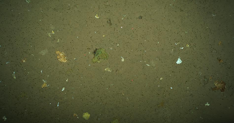 Meeresboden mit Ansammlungen von Algen, die von der Oberfläche bis mehr als 4.000 Meter absanken. Foto: Antje Boetius, AWI