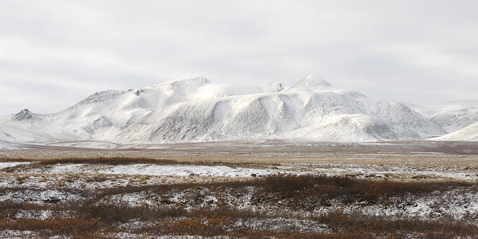 Wenn es nach der Wissenschaft geht dürften in 50 Jahren in der Tundra von Chukotka Bäume stehen.