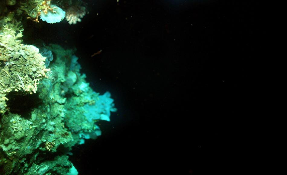 Der obere Teil des Riffes (links oben) wird von lebenden Korallen besetzt, die auf den abgestorbenen Teilen alter Korallen wachsen. © Bedford Institute of Oceanography