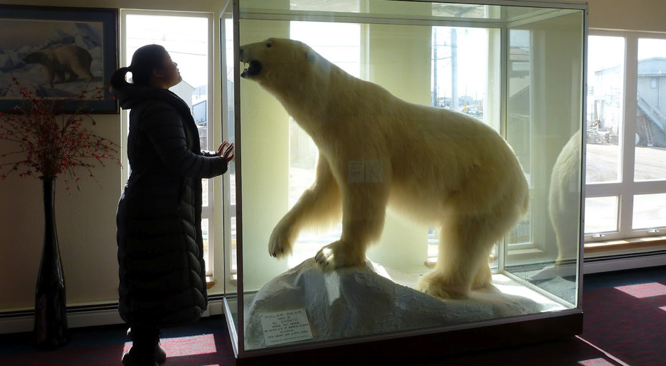 Asiaten sind von Eisbären fasziniert – egal ob tot oder lebend.