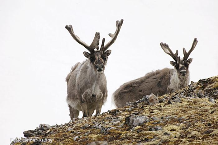 Spitzbergen-028