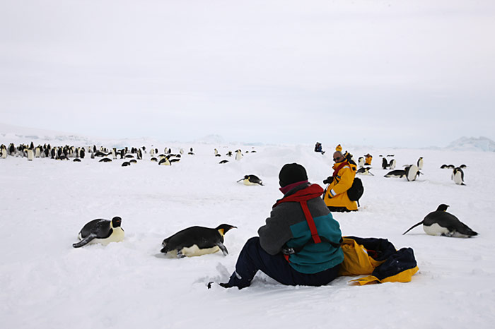 PolarNEWS_Kaiserpinguine_Snowhill_014