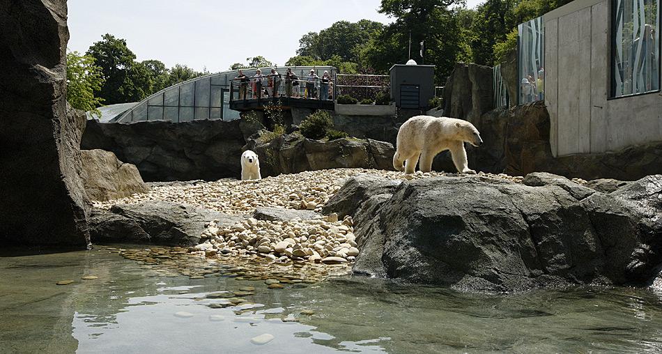Die neue Anlage ist 1.700 Quadratmeter gross und bietet den Eisbären mit Fels- und Geröllflächen, Wasserfällen und Bächen wird den Eisbären eine abwechslungsreiche Landschaft.
